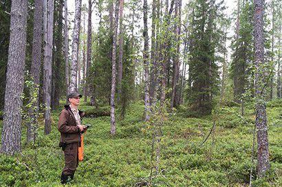 Metsähallitus aloittaa metsien käsittelyn jatkuvan kasvatuksen alueella Suomussalmella
