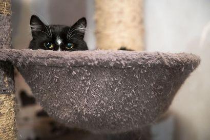 Tutkimus: Koirien ja kissojen ruuantuotanto vaatii vähintään Ruotsin kokoisen peltoalan