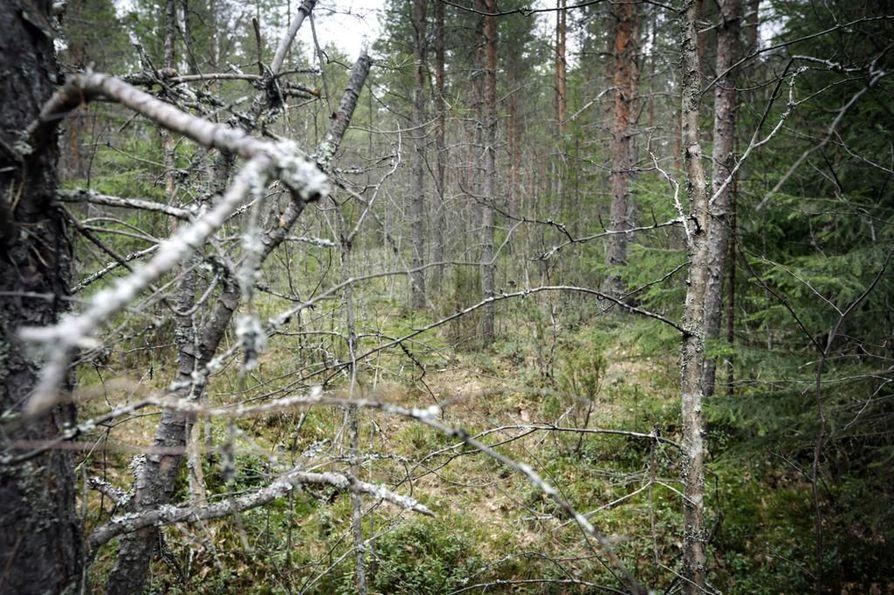 Sanginjoen suojelualueen perustaminen palautettiin uudelleen valmisteltavaksi. Asia tuodaan valtuuston käsittelyyn vuoden 2017 loppuun mennessä.