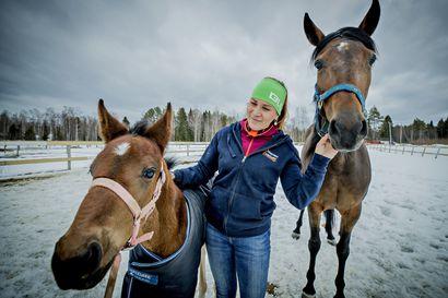 """Iissä tiedetään, että hevosen siementämisessä ei ole arpapelille sijaa –Huippuyksilöiden jälkeläisten hinnat kohoavat jopa kymmeniintuhansiin euroihin: """"Ne eivät ole mitään harrastehevosia, joista maksetaan tuollaisia summia"""""""