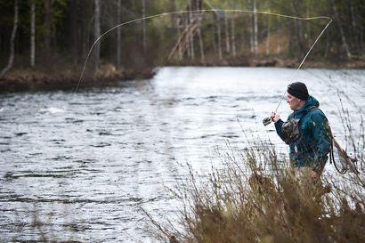 """Pro Kuusamo -yhdistyksen hallitus keräsi kolehdin Kuusinkijoen kunnostukseen: """"Haluamme esimerkillämme haastaa mukaan talkoihin kaikki Kuusamon ja luonnonkalakantojen ystävät – ja tiedämme että heitä on paljon"""""""