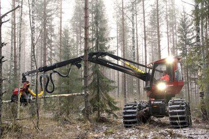 Pohjois-Suomen puukauppa piristyy – havutukeilla suurin menekki