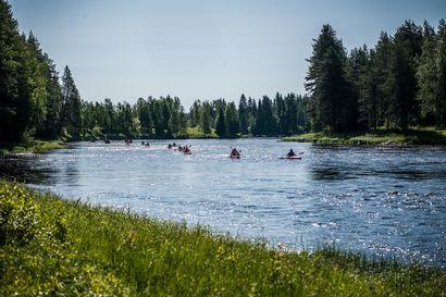 Metsähallitus kunnostaa puroja Pohjois-Pohjanmaan ja Kainuun luonnonsuojelualueilla – yksi kunnostuskohteista sijaitsee Taivalkoskella