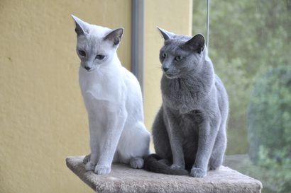 Kissoilta löytyi seitsemän persoonallisuuspiirrettä – yleisimmät ongelmat liittyvät aggressiivisuuteen ja sisäsiisteyteen
