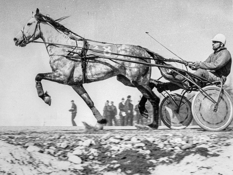 K.A. Plommi oli ensimmäinen lappilaisomistukseen rekisteröity lämminveriravuri. Ranualaisen Pertti Rantalan omistuksessa ja ohjastuksessa se väritti pohjoisen nousevaa raviurheilua 1960-luvulta 1970-luvun loppupuolelle.
