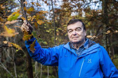 Rovaniemen Juurakkotiellä Suomen pohjoisimmat tammet?