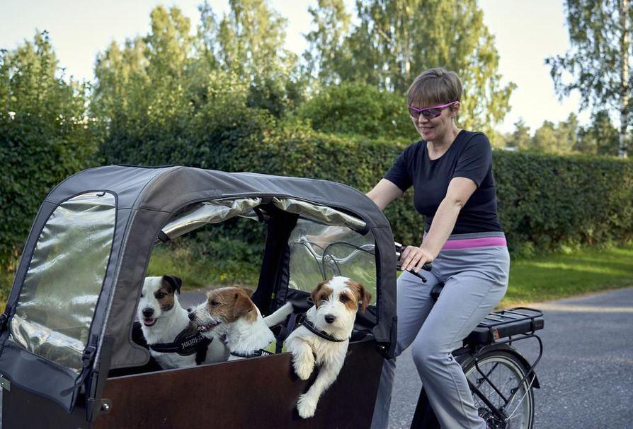 Anu Väänäsen koirakaravaani kääntää  vastaantulijoiden suupielet hymyyn. Leego (oik.), Lalli ja Lupu nauttivat kyydistä täysin  siemauksin.