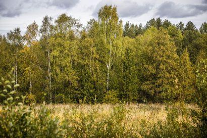 Ruska on pian parhaimmillaan Lapissa – Viilenevät säät enteilevät voimakasta väriloistoa