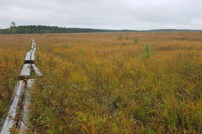 Martimoaavan soidensuojelualueen reiteillä aloitetaan kunnostustyöt – pitkoksia uusitaan yli kolmen kilometrin matkalta
