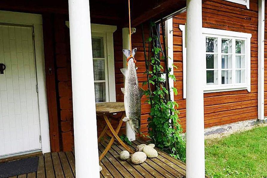 Facebookin kalastusaiheisessa ryhmässä huomattiin, että Tornion- ja Muonionjoella pyydetty lohi ei ollutkaan lohi vaan meritaimen, jonka pyydystäminen on ollut kiellettyä jo vuodesta 2013 alkaen.