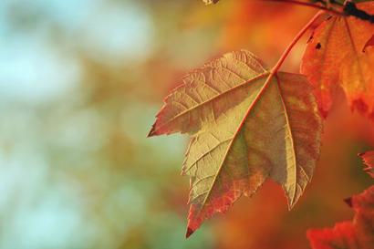 Syksyllä tarvitaan tuttuja perusasioita arjessa jaksamiseen