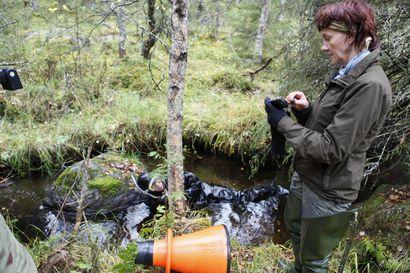 Raakun suojelulle miljoonarahoitus – erittäin uhanalaisen jokihelmisimpukan eli raakun elinympäristöjä parannetaan ja simpukoiden etsintään koulutetaan raakkukoira