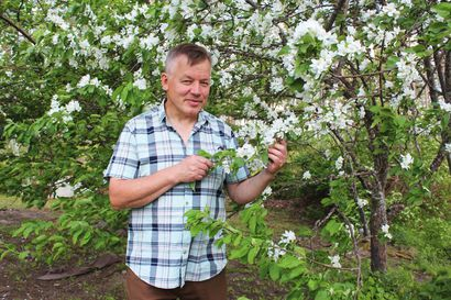 Päärynäpuut kasvavat Lapin taivaan alla – Jorma Ulkuniemen kukoistava puutarha Sallan Salmivaaran rinteillä on kymmenien vuosien tulos