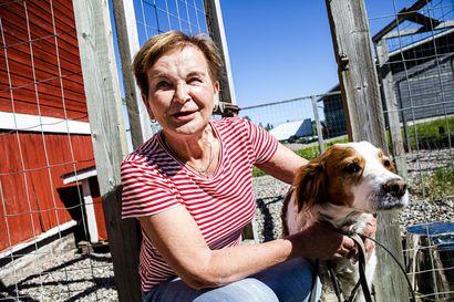 Hannele Pokka teki viimeiset vuodet töitä etelässä, mutta eläkepäivilleen hän palaa Lappiin