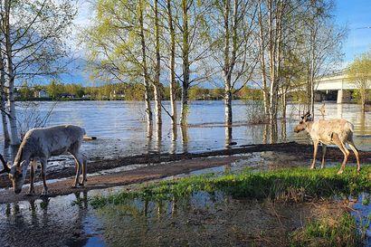 Tulva valtasi tiet ja pellot: Katso lukijoidemme lähettämistä kuvista, miten tulva on muuttanut maisemaa Lapissa