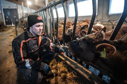 Uutta potkua maitotiloille - Koillismaalta ei maidontuotanto lopu