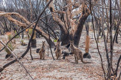 WWF:n raportti: Maapallon metsäpalot voivat kiihtyä pahemmiksi kuin viime vuonna – järjestö vaatii, että Amazonin hakkuut ja poltto lopetettaisiin ainakin viideksi vuodeksi