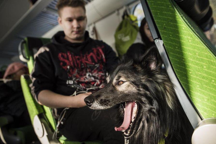 Keke-koira on lähtenyt junailemaan Taneli Ronkaisen ja Moona Eskosen kanssa.