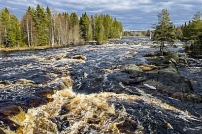 Saaga Travel aloittaa kuljetukset Oulun keskustasta Koitelinkoskelle ja Liminganlahdelle, kokeilu jatkuu mahdollisesti myös kesäkaudella