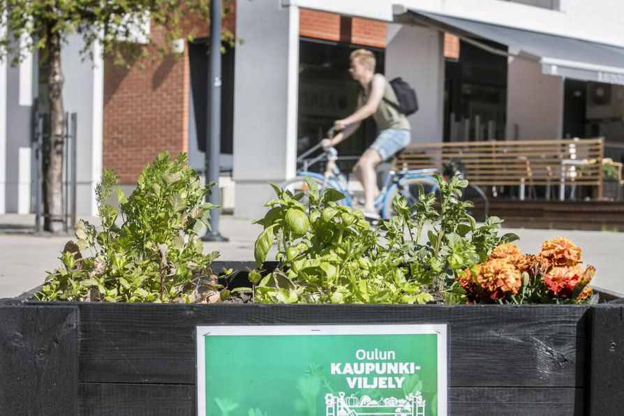 Etu-Lyötyn Veturiaukiolta löytyy 16 viljelylaatikkoa. Viljelijä vastaa itse siementen tai taimien istutuksesta sekä kasvien hoidosta ja kastelusta.