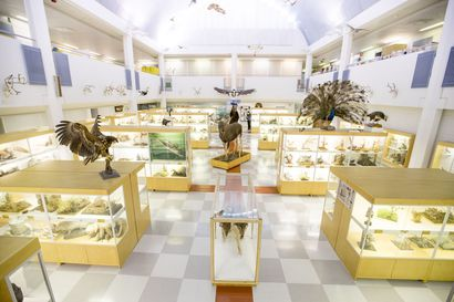 Oulun yliopiston eläinmuseon vetonauloina täytetyt eläimet sekä lähes 60 metrinen dioraama  –museon juuret ulottuvat yli 200 vuoden taakse