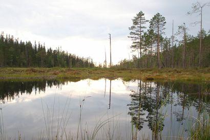 Pääkirjoitus: Luonnon köyhtyminen pitää pysäyttää kansainvälisin toimin – Suomessa tärkein kamppailu käydään metsissä