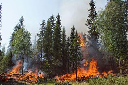 Kulotus sujui juuri ja juuri hyväksyttävästi – Lomavaaran ennallistamispoltto oli osa Syötteen kansallispuistossa tavoitteena olevaa palojatkumoa