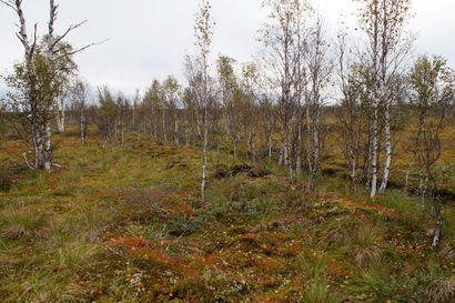 Lukijalta: Metsämaan hiilivarasto on ilmastopäästöjen tuntematon tekijä