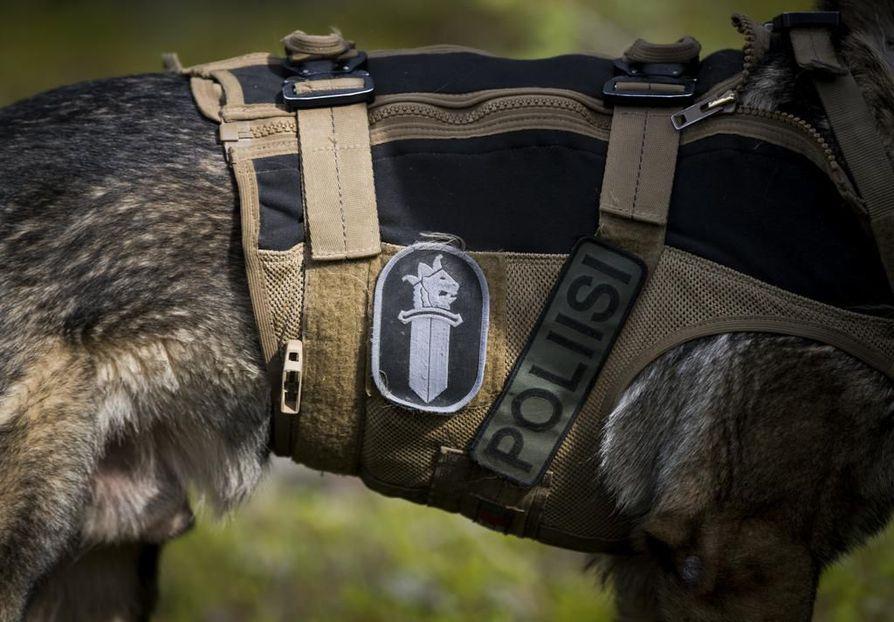 Paikalle hälytettiin kaksi poliisikoiranohjaajaa, jotka aloittivat etsinnät koirien avulla. Kuvituskuva.