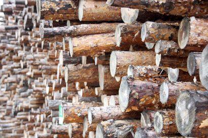 """Kemin biotuotetehdas tuo hyvää myös Koillismaalle ja voi vaikuttaa jopa väestökehitykseen: """"Kun tulee lisää puukuitukäyttöä, se parantaa sahateollisuuden asemaa"""""""