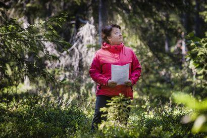 Lappilainen metsä käy nyt kaupaksi, metsähehtaarin hinnat nousseet paikoin jopa neljänneksen