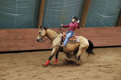 Karjatyöskentelyä kuin ennen vanhaan – Kempeleen Rajakorpi Ranchilla opetetaan hevosia toimimaan nautalauman kanssa, katso video