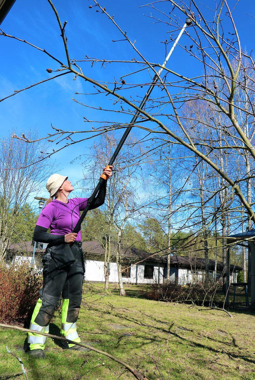 Mira Sovijärvi Sovipihat-yrityksestä kertoo, että toukokuu sisältää perinteisesti pensas- aitojen  leikkausta, haravointia sekä  yleistä siistimistä. Kesäkuussa  alkavat sitten istutukset.