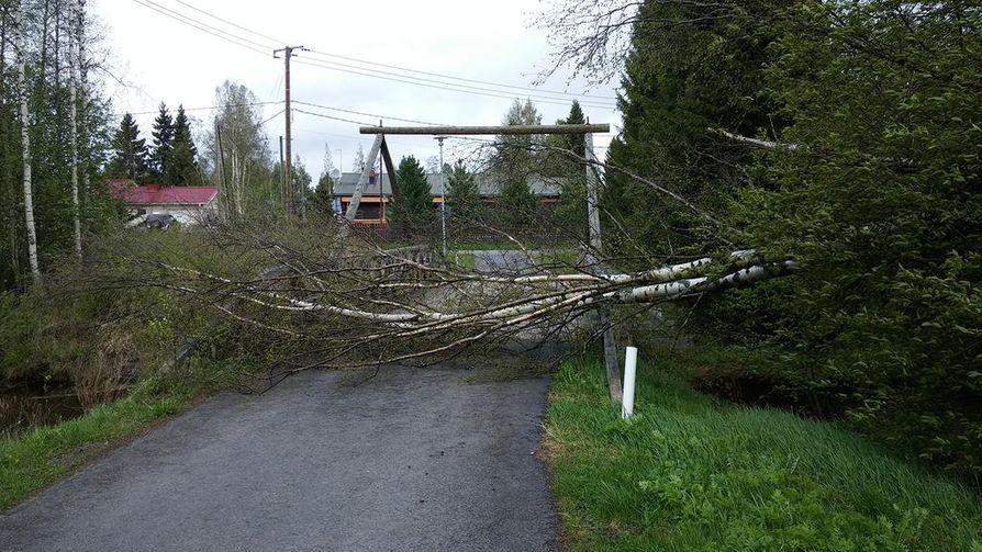 Kaatunut puu katkaisi pyörätien Limingassa Liminganjoen ylittävän sillan edustalla.