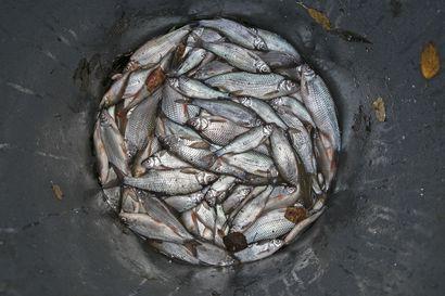 Lukijalta: Kotimaisesta kalasta potkua päivään