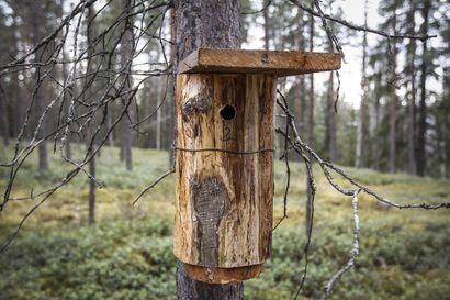 Lintuharrastajien joukko on kasvanut koronapandemian aikana– Suomi on yli miljoonan linnunpöntön maa