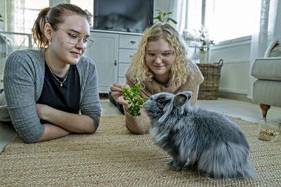 """""""Lemmikkien Airbnb"""" toimii myös Oulussa – ainakin näistä paikoista voi löytää luotettavan hoitajan loman ajalle"""
