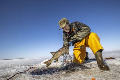 """Keväällä kalastus vain kiihtyy Lumijoen Varjakassa – """"Kynnän mieluimmin ja parhaiten merta kuin peltoa"""""""