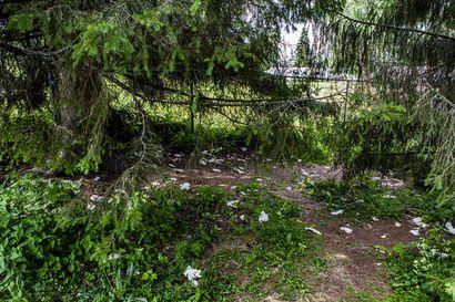 Vessapaperit sen paljastavat: Koskipuiston kuusten alle tuli yleinen yövessa – bajamajoja puistoon ei silti ole tulossa