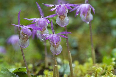Oulangan kansallispuistossa voi kohdata retkietiketin sanansaattajia tulevana torstaina – ohjeilla suojellaan alueen upeaa luontoa