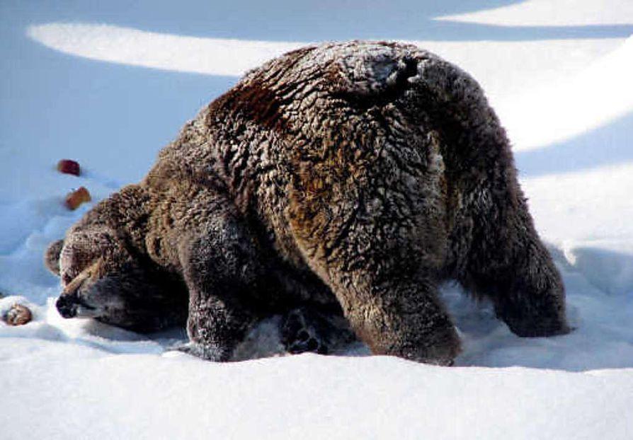 23-vuotias kontio heräili talviuniltaan jo lauantaina. Maanantaina se päästettiin ulos tarhaan. Lähiaikoina Palle-Jooseppi saa seuraa Milla-karhusta, joka ei malttanut käydä talviunille muiden karhujen tavoin.