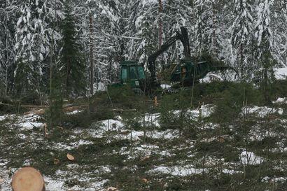 Euroopan parlamentin äänestystulos oli Suomen metsäklusterille mieluisa – Metsät nähdään unionissa muunakin kuin suojelukohteena