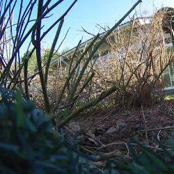 Lukijan video: Haapana pesii Oulujoen rantamilla