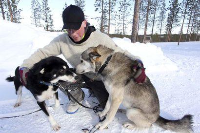 Mikael olisi halunnut ajaa 14 rekikoiraansa perille asti – Norjan koronapäätökset keskeyttivät 1200 kilometrin valjakkokisan Finnmarkin tuntureilla