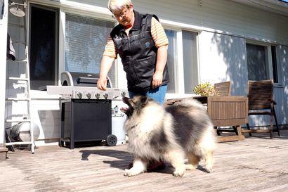 """Leena koulutti mestariluokan koirat: """"Päivittäiseen elämiseen tulee mukaan se, että ne koirat uskovat asioita."""""""