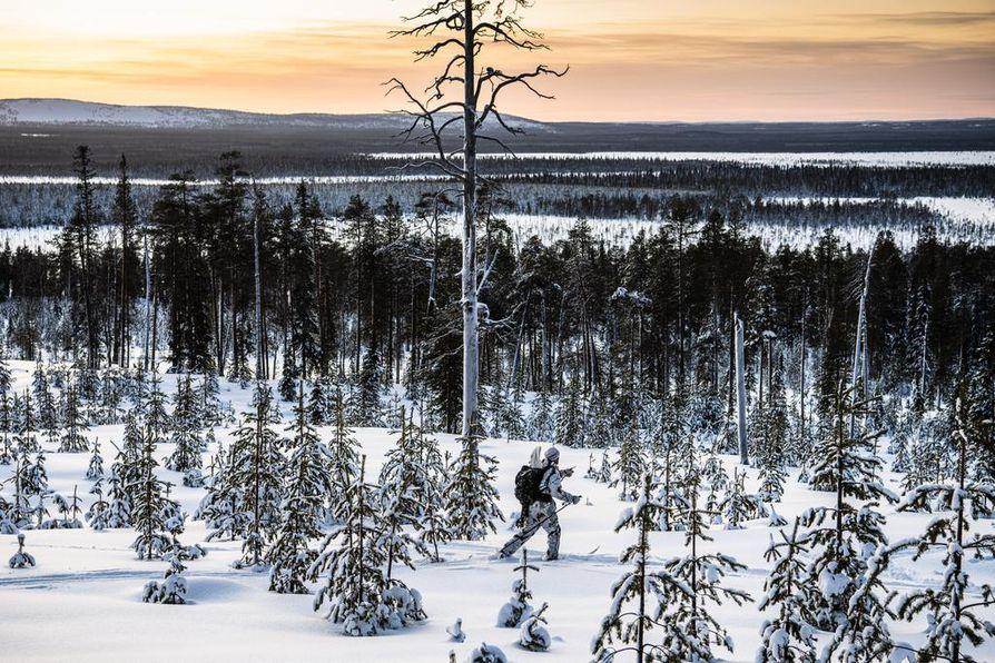 Sodankylän Alakitisen vaarat ja aavat ovat Esko Puljulle läpeensä tuttuja.