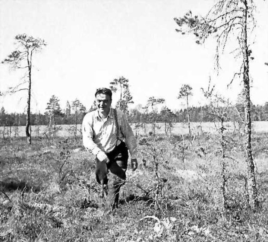 Pentti Haanpää Piippolan Lamusuolla vuonna 1950.