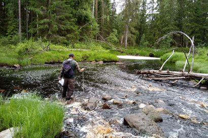 Siikajoen latvavedet tutkittu joessa kahlaten –yhden koskipaikan kunnostuksella liikkeelle uittoperatulla