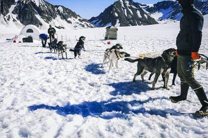 Alaska on aidosti villi Pohjola – Matti Pajarin kesätyöhön kuului helikopterilentoja, yksinäisiä öitä jäätiköllä ja karhusprayta