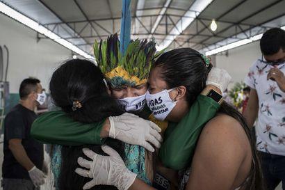 Amazonin sademetsän tuhoaminen uhkaa kiihtyä Brasiliassa –Greenpeace: Hallituksen tavoite on heikentää toimintatapoja ja lisätä metsien tuhoa